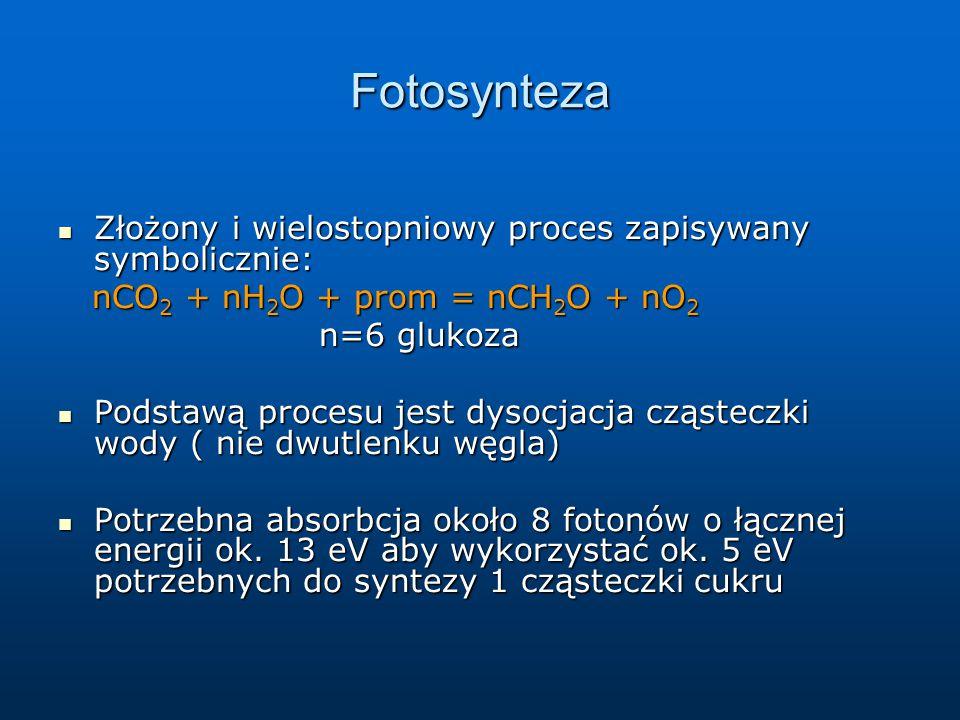 Fotosynteza Złożony i wielostopniowy proces zapisywany symbolicznie: Złożony i wielostopniowy proces zapisywany symbolicznie: nCO 2 + nH 2 O + prom =