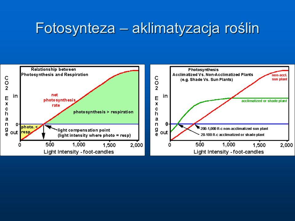 Fotosynteza – aklimatyzacja roślin