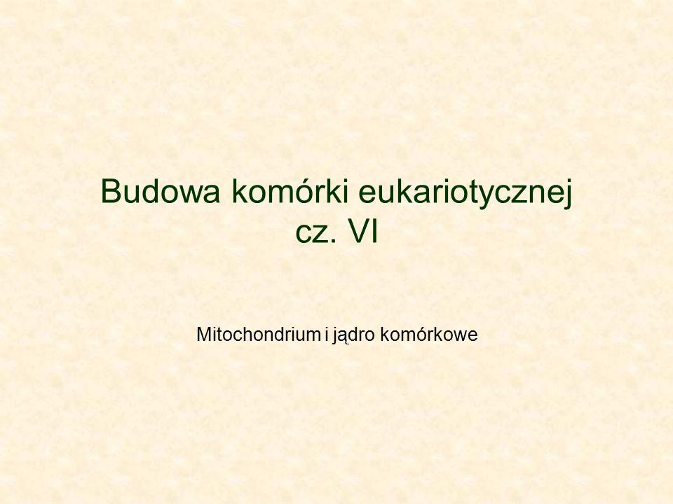 Budowa komórki eukariotycznej cz. VI Mitochondrium i jądro komórkowe
