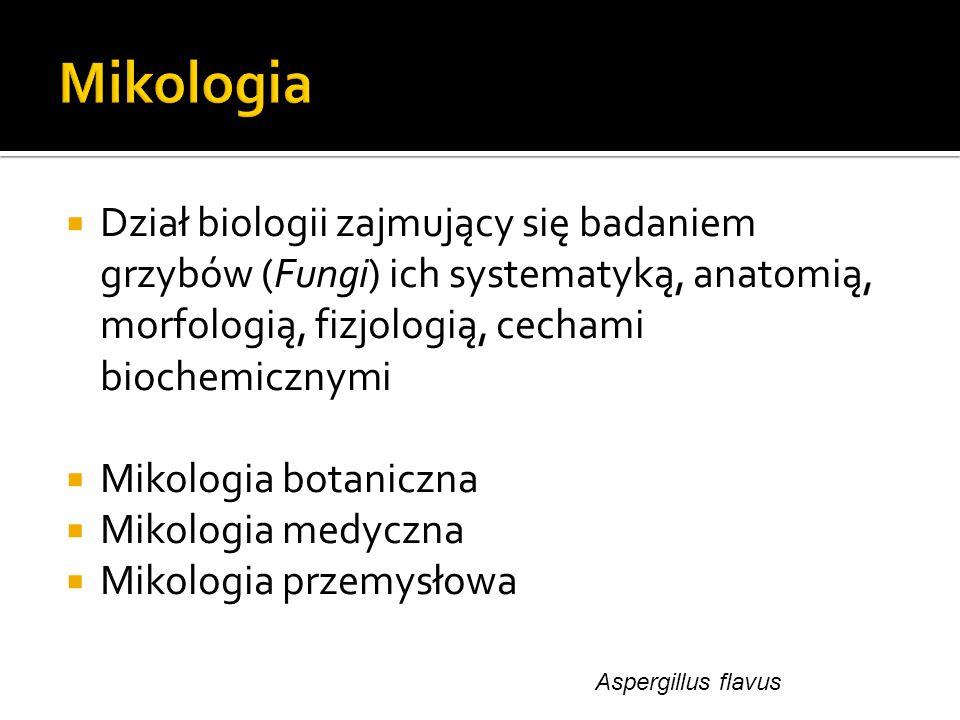  Dział biologii zajmujący się badaniem grzybów (Fungi) ich systematyką, anatomią, morfologią, fizjologią, cechami biochemicznymi  Mikologia botanicz