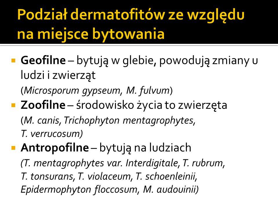  Geofilne – bytują w glebie, powodują zmiany u ludzi i zwierząt (Microsporum gypseum, M. fulvum)  Zoofilne – środowisko życia to zwierzęta (M. canis
