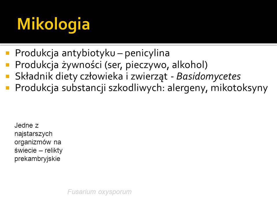  Produkcja antybiotyku – penicylina  Produkcja żywności (ser, pieczywo, alkohol)  Składnik diety człowieka i zwierząt - Basidomycetes  Produkcja s