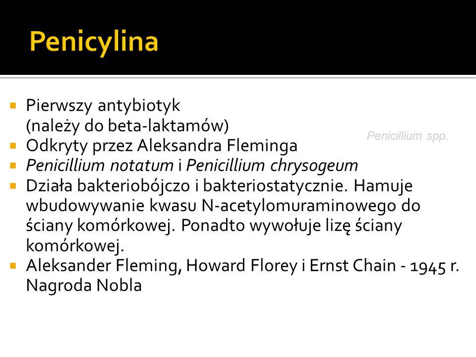  Pierwszy antybiotyk (należy do beta-laktamów)  Odkryty przez Aleksandra Fleminga  Penicillium notatum i Penicillium chrysogeum  Działa bakteriobó