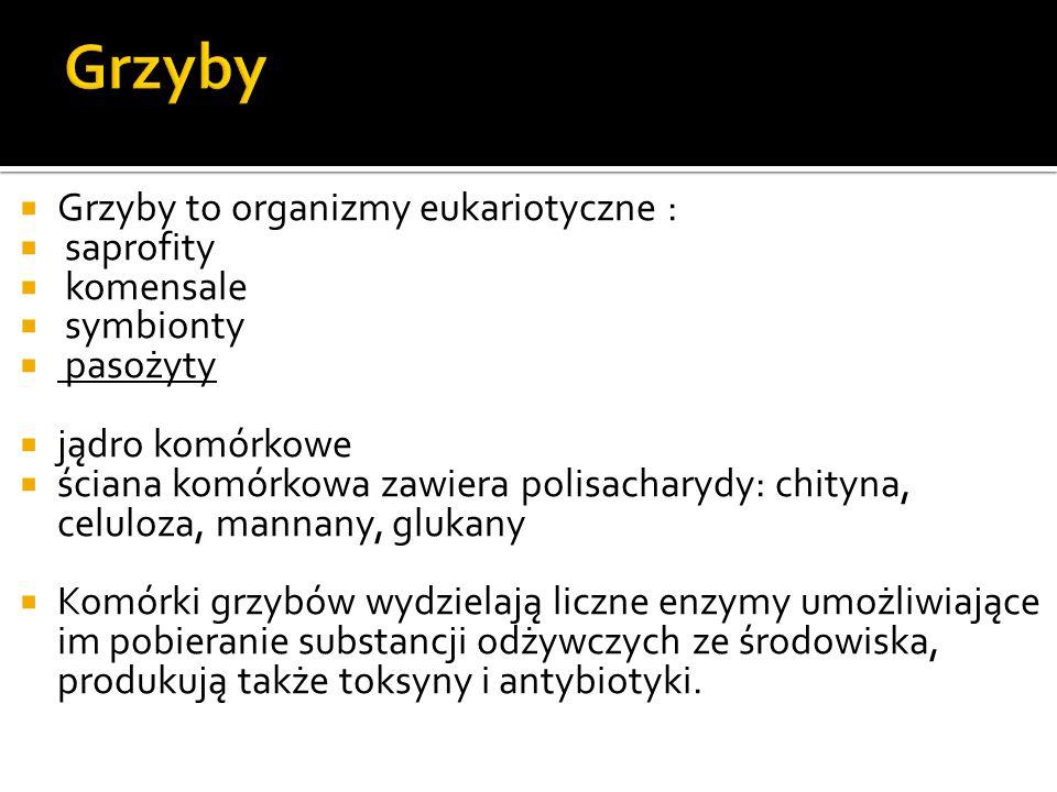  Dermatofity: Trichophyton mentagrophytes, T.rubrum, T.