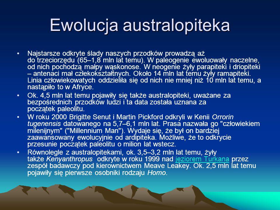 Ewolucja australopiteka Najstarsze odkryte ślady naszych przodków prowadzą aż do trzeciorzędu (65–1,8 mln lat temu).