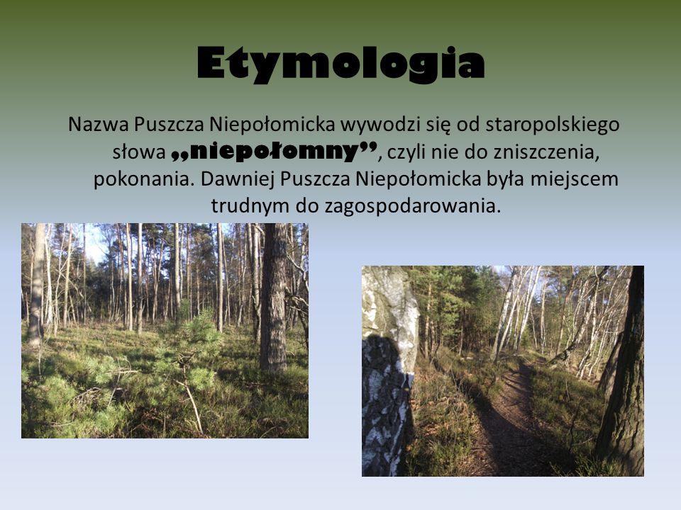 """Etymologia Nazwa Puszcza Niepołomicka wywodzi się od staropolskiego słowa """"niepołomny"""", czyli nie do zniszczenia, pokonania. Dawniej Puszcza Niepołomi"""