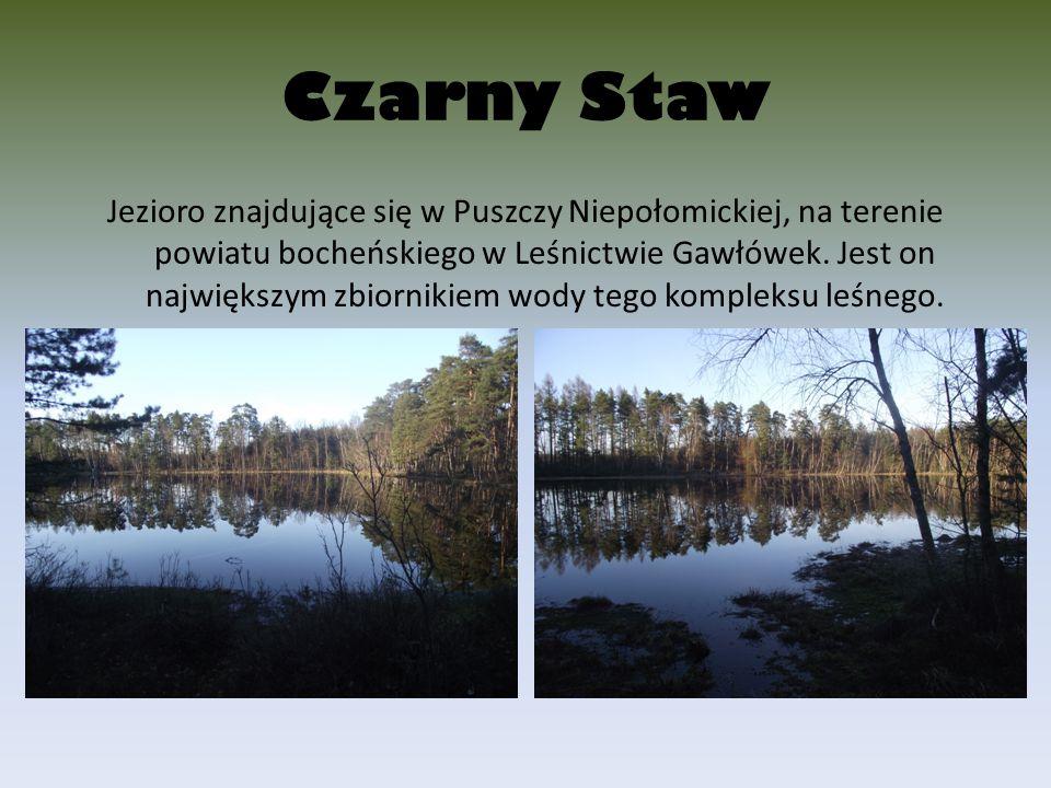 Czarny Staw Jezioro znajdujące się w Puszczy Niepołomickiej, na terenie powiatu bocheńskiego w Leśnictwie Gawłówek. Jest on największym zbiornikiem wo