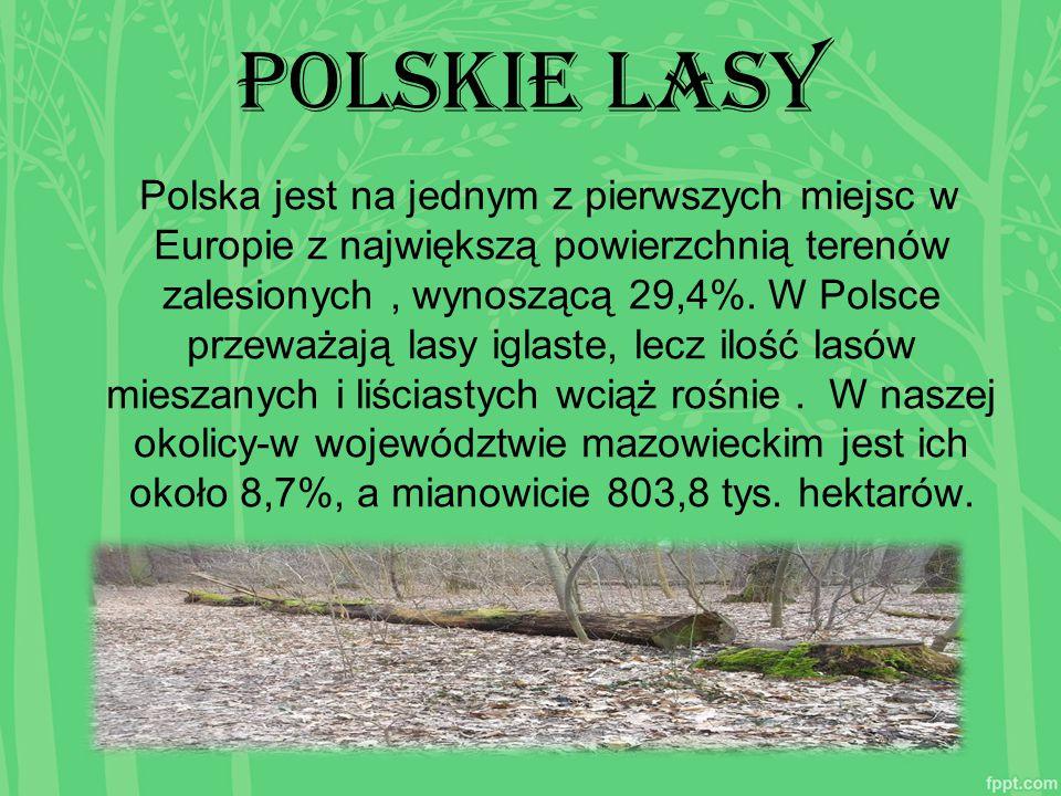 Polskie lasy Polska jest na jednym z pierwszych miejsc w Europie z największą powierzchnią terenów zalesionych, wynoszącą 29,4%. W Polsce przeważają l