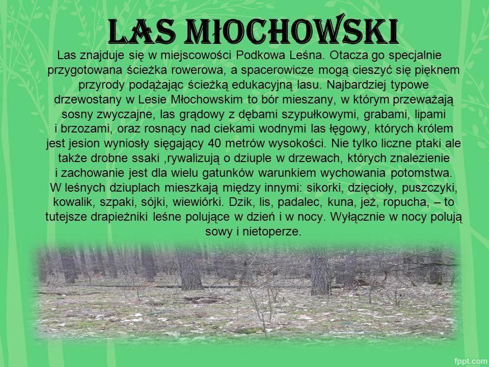 Las M ł ochowski Las znajduje się w miejscowości Podkowa Leśna. Otacza go specjalnie przygotowana ścieżka rowerowa, a spacerowicze mogą cieszyć się pi