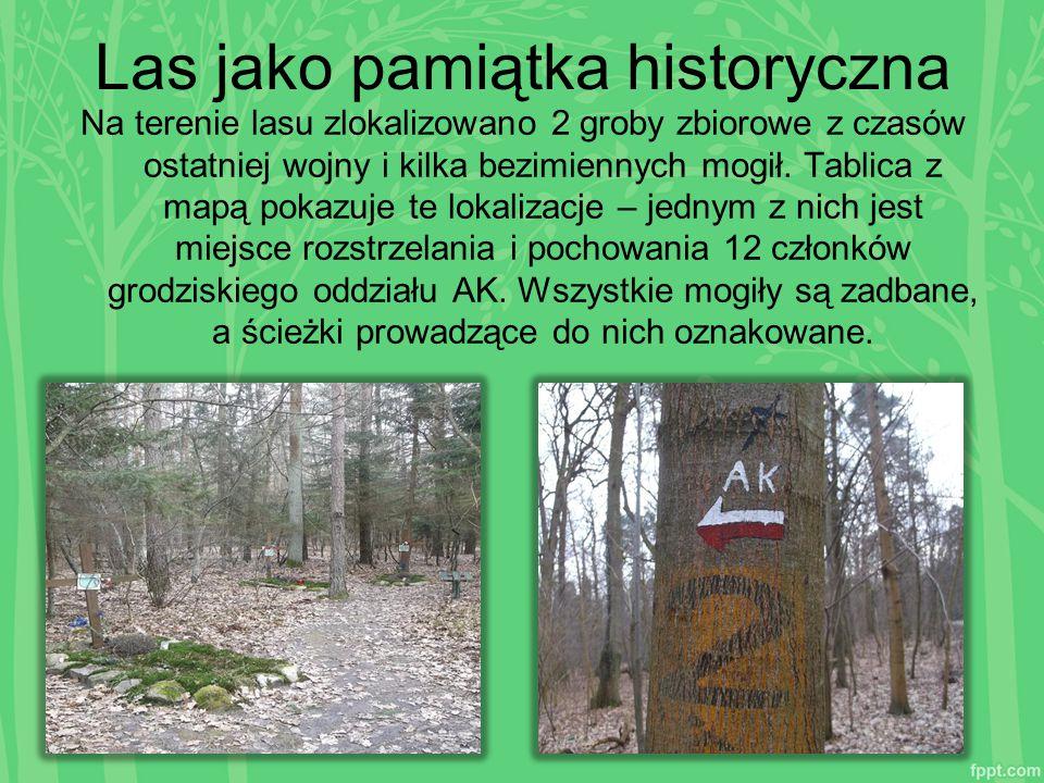 Las jako pamiątka historyczna Na terenie lasu zlokalizowano 2 groby zbiorowe z czasów ostatniej wojny i kilka bezimiennych mogił. Tablica z mapą pokaz