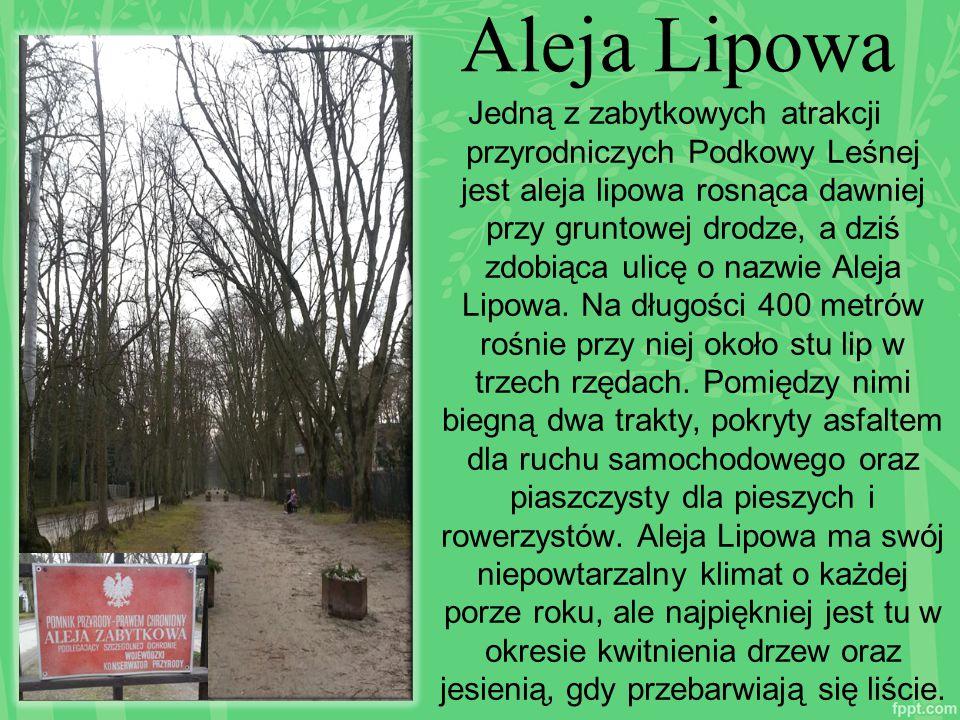 Aleja Lipowa Jedną z zabytkowych atrakcji przyrodniczych Podkowy Leśnej jest aleja lipowa rosnąca dawniej przy gruntowej drodze, a dziś zdobiąca ulicę