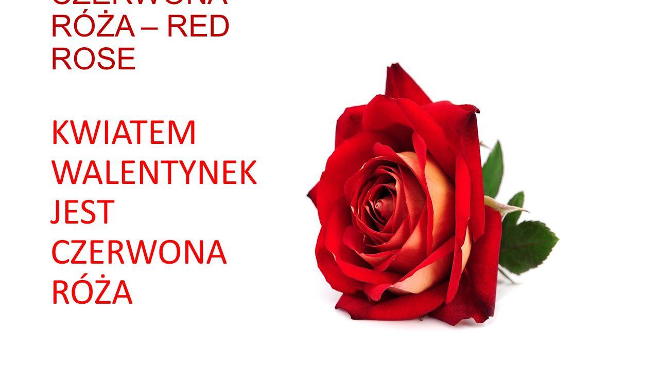 CZERWONA RÓŻA – RED ROSE KWIATEM WALENTYNEK JEST CZERWONA RÓŻA