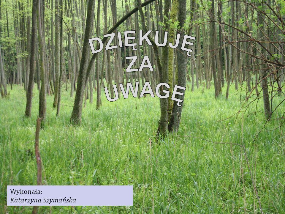 Wykonała: Katarzyna Szymańska