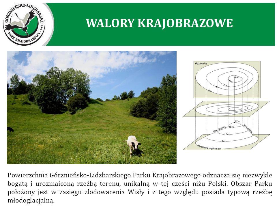 Powierzchnia Górznieńsko-Lidzbarskiego Parku Krajobrazowego odznacza się niezwykle bogatą i urozmaiconą rzeźbą terenu, unikalną w tej części niżu Pols