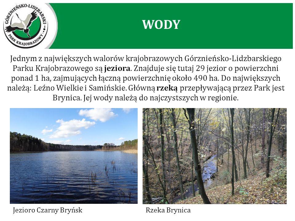 Jednym z największych walorów krajobrazowych Górznieńsko-Lidzbarskiego Parku Krajobrazowego są jeziora. Znajduje się tutaj 29 jezior o powierzchni pon