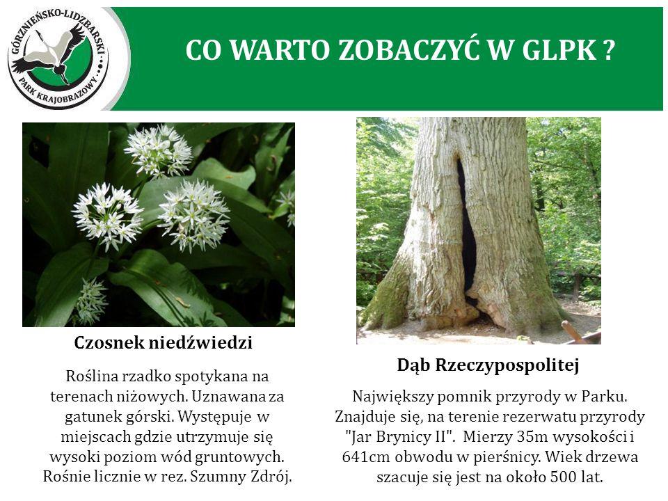 Roślina rzadko spotykana na terenach niżowych. Uznawana za gatunek górski. Występuje w miejscach gdzie utrzymuje się wysoki poziom wód gruntowych. Roś