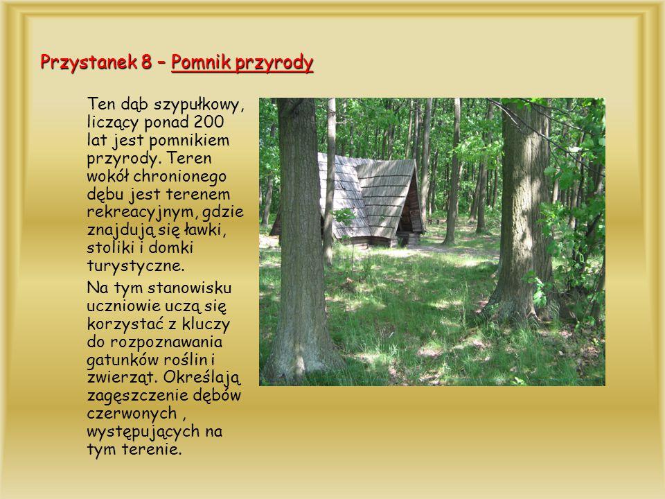 Przystanek 8 – Pomnik przyrody Ten dąb szypułkowy, liczący ponad 200 lat jest pomnikiem przyrody. Teren wokół chronionego dębu jest terenem rekreacyjn