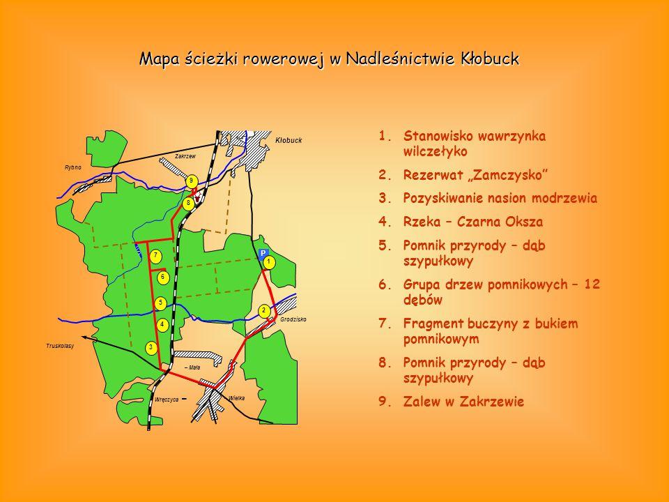 4 Rybno Zakrzew Kłobuck Grodzisko 7 3 Truskolasy – Wielka – Mała 2 P 1 5 9 Wręczyca – 6 8 Mapa ścieżki rowerowej w Nadleśnictwie Kłobuck 1.Stanowisko