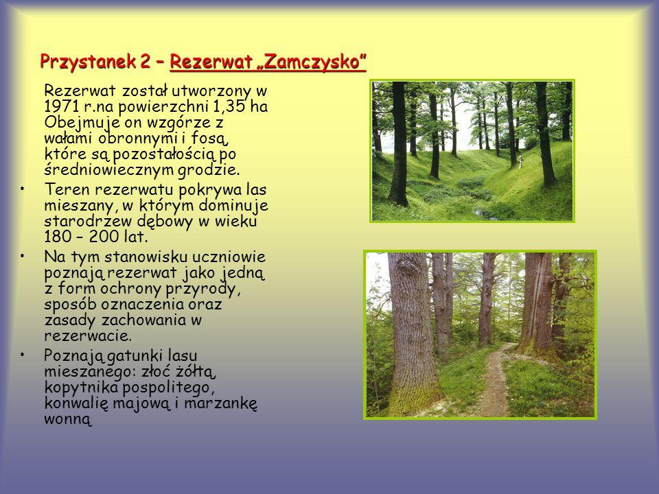 """Przystanek 2 – Rezerwat """"Zamczysko"""" Rezerwat został utworzony w 1971 r.na powierzchni 1,35 ha Obejmuje on wzgórze z wałami obronnymi i fosą, które są"""