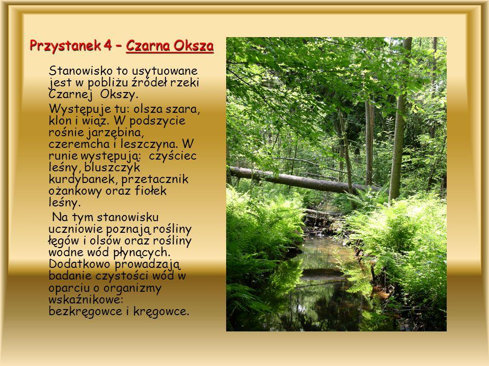 Przystanek 4 – Czarna Oksza Stanowisko to usytuowane jest w pobliżu źródeł rzeki Czarnej Okszy. Występuje tu: olsza szara, klon i wiąz. W podszycie ro