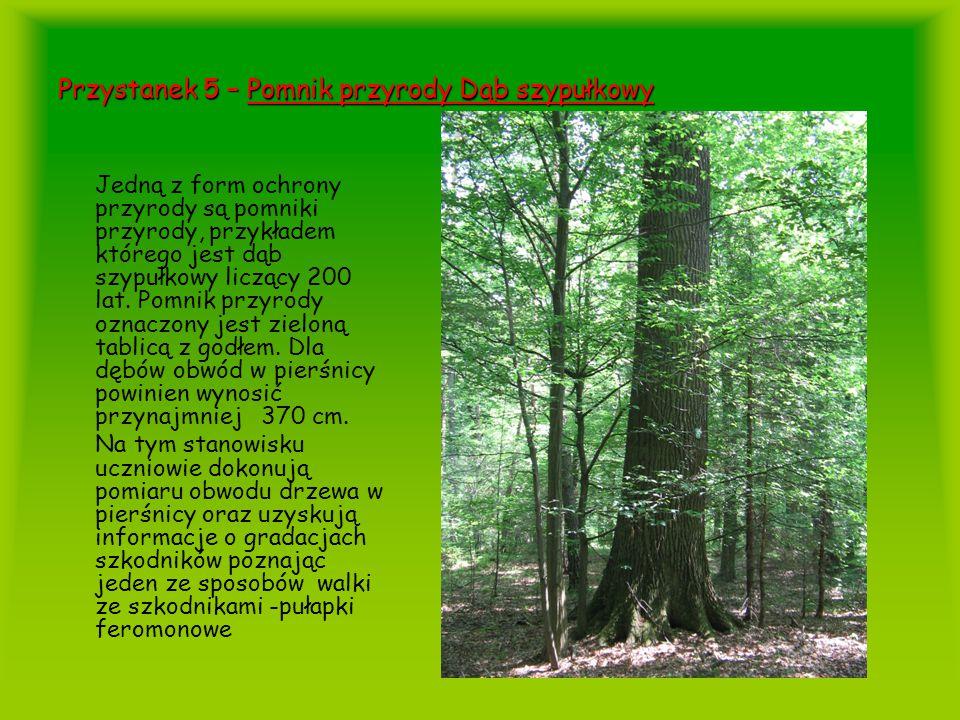 Przystanek 5 – Pomnik przyrody Dąb szypułkowy Jedną z form ochrony przyrody są pomniki przyrody, przykładem którego jest dąb szypułkowy liczący 200 la