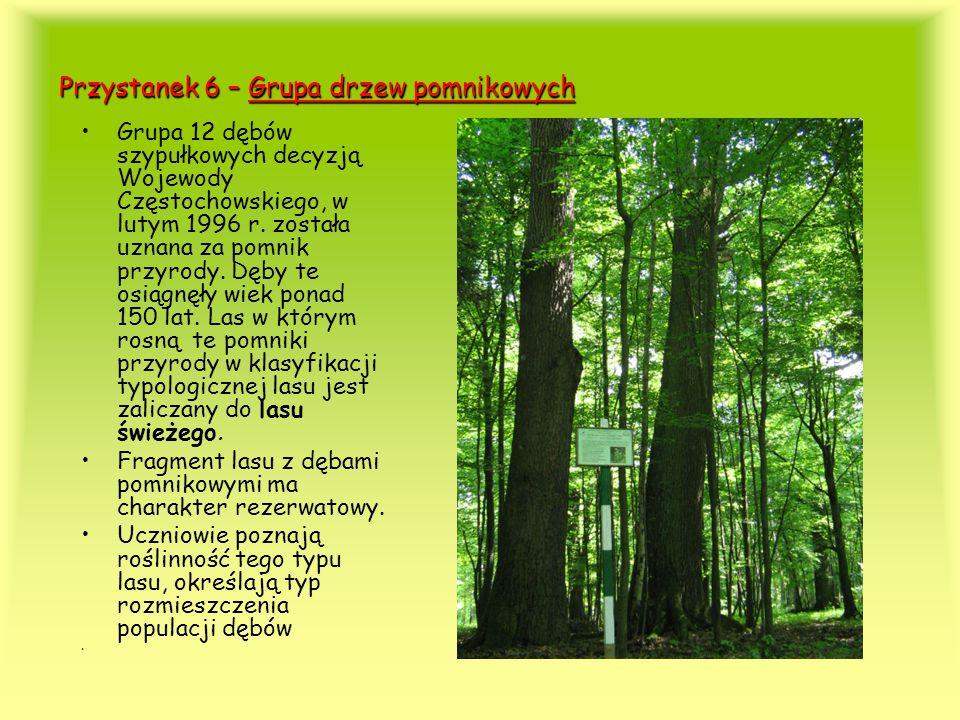 Przystanek 6 – Grupa drzew pomnikowych Grupa 12 dębów szypułkowych decyzją Wojewody Częstochowskiego, w lutym 1996 r. została uznana za pomnik przyrod