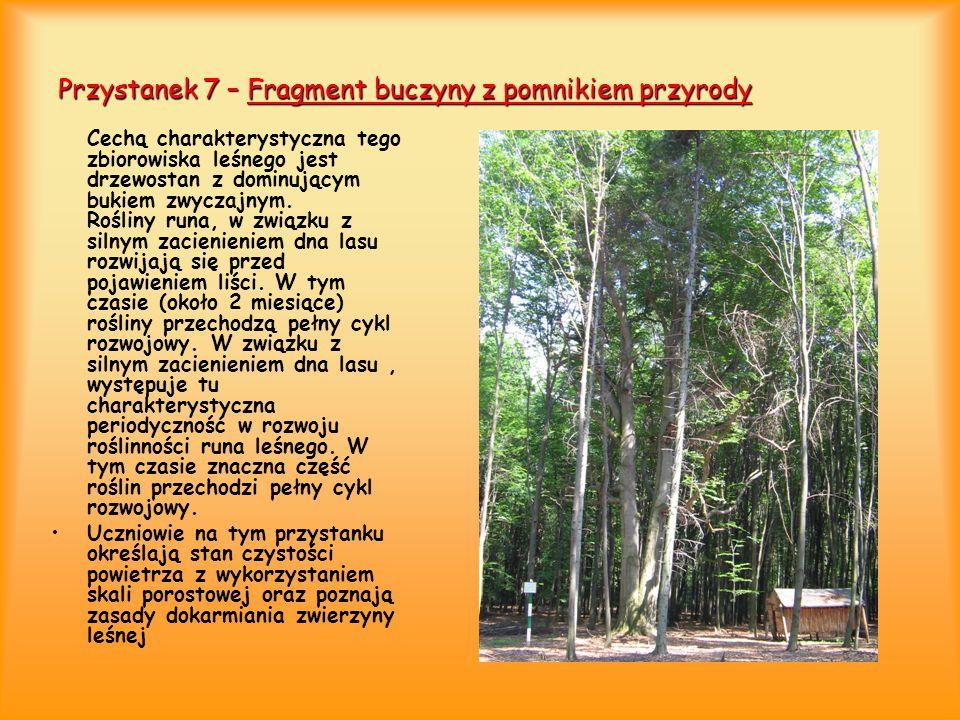 Przystanek 8 – Pomnik przyrody Ten dąb szypułkowy, liczący ponad 200 lat jest pomnikiem przyrody.