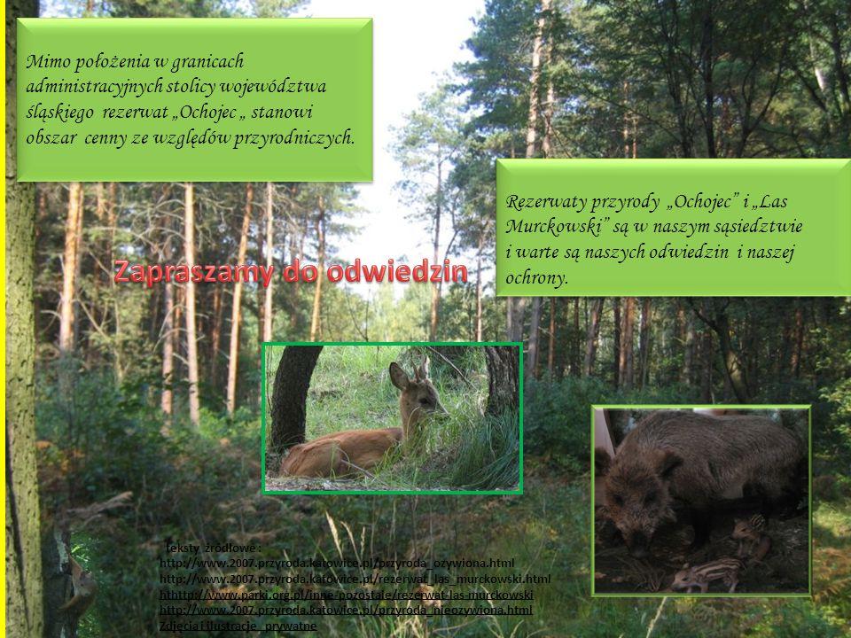 """teksty źródłowe : http://www.2007.przyroda.katowice.pl/przyroda_ozywiona.html http://www.2007.przyroda.katowice.pl/rezerwat_las_murckowski.html hthttp://www.parki.org.pl/inne-pozostale/rezerwat-las-murckowski http://www.2007.przyroda.katowice.pl/przyroda_nieozywiona.html Zdjęcia i ilustracje prywatne Mimo położenia w granicach administracyjnych stolicy województwa śląskiego rezerwat """"Ochojec """" stanowi obszar cenny ze względów przyrodniczych."""