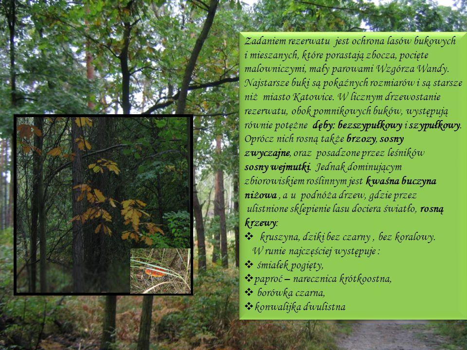 Zadaniem rezerwatu jest ochrona lasów bukowych i mieszanych, które porastają zbocza, pocięte malowniczymi, mały parowami Wzgórza Wandy. Najstarsze buk