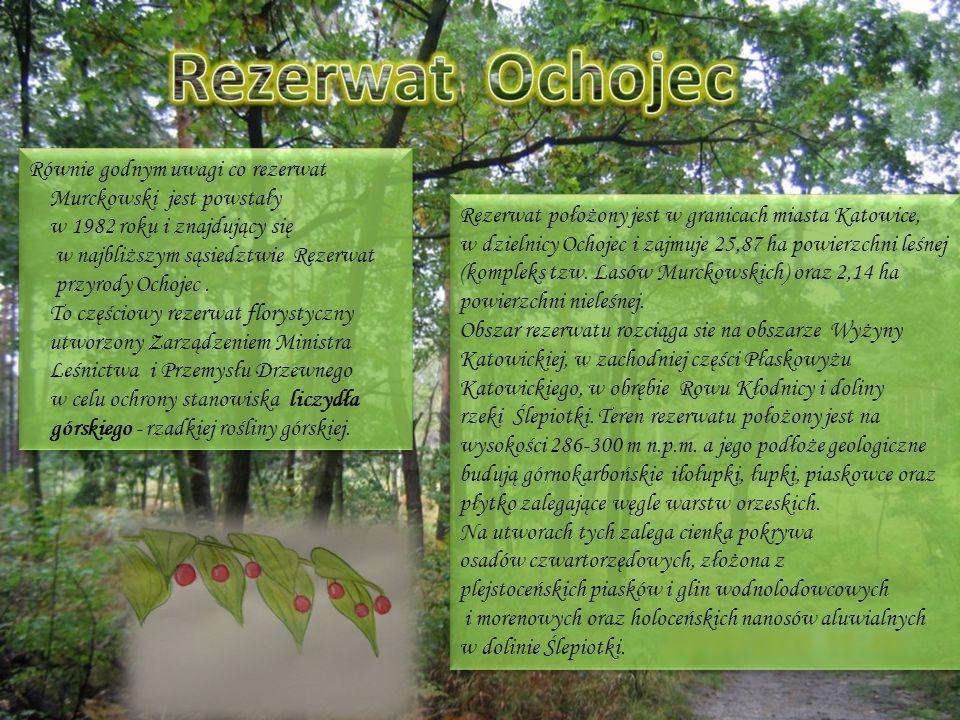 Rezerwat położony jest w granicach miasta Katowice, w dzielnicy Ochojec i zajmuje 25,87 ha powierzchni leśnej (kompleks tzw. Lasów Murckowskich) oraz