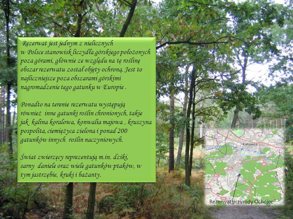 Rezerwat jest jednym z nielicznych w Polsce stanowisk liczydła górskiego położonych poza górami, głównie ze względu na tę roślinę obszar rezerwatu zos