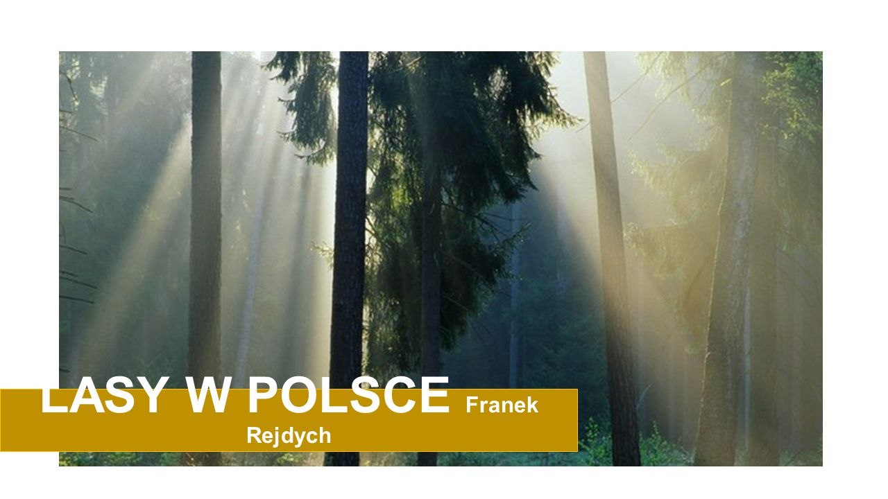 LASY W POLSCE Polska jest w europejskiej czołówce, jeśli chodzi o powierzchnię lasów.