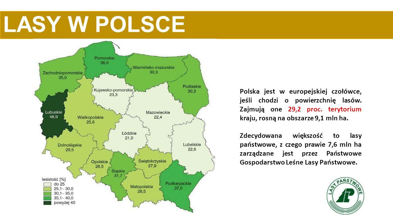 LASY W POLSCE Polska jest w europejskiej czołówce, jeśli chodzi o powierzchnię lasów. Zajmują one 29,2 proc. terytorium kraju, rosną na obszarze 9,1 m