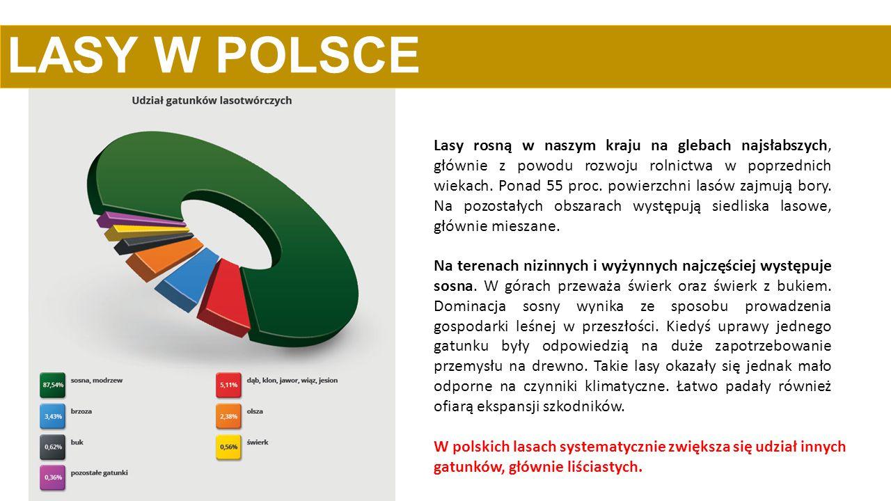 LASY W POLSCE W Polsce lasów wciąż przybywa.Lesistość kraju została zwiększona z 21 proc.