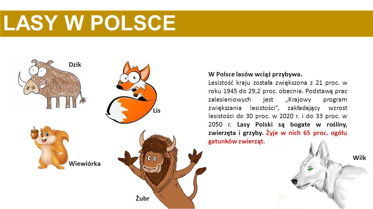 LASY W POLSCE W Polsce lasów wciąż przybywa. Lesistość kraju została zwiększona z 21 proc. w roku 1945 do 29,2 proc. obecnie. Podstawą prac zalesienio