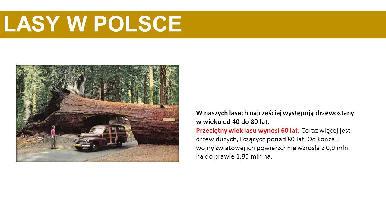LASY W POLSCE W naszych lasach najczęściej występują drzewostany w wieku od 40 do 80 lat. Przeciętny wiek lasu wynosi 60 lat. Coraz więcej jest drzew