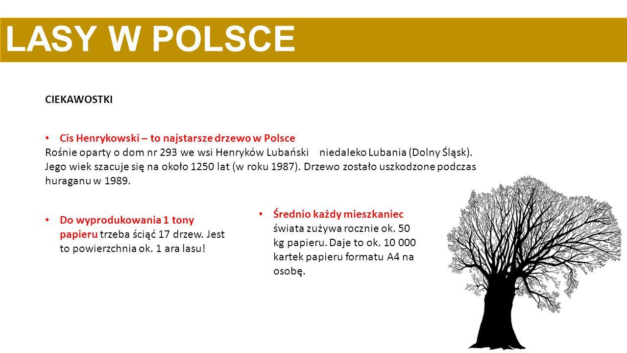 CIEKAWOSTKI LASY W POLSCE Cis Henrykowski – to najstarsze drzewo w Polsce Rośnie oparty o dom nr 293 we wsi Henryków Lubański niedaleko Lubania (Dolny