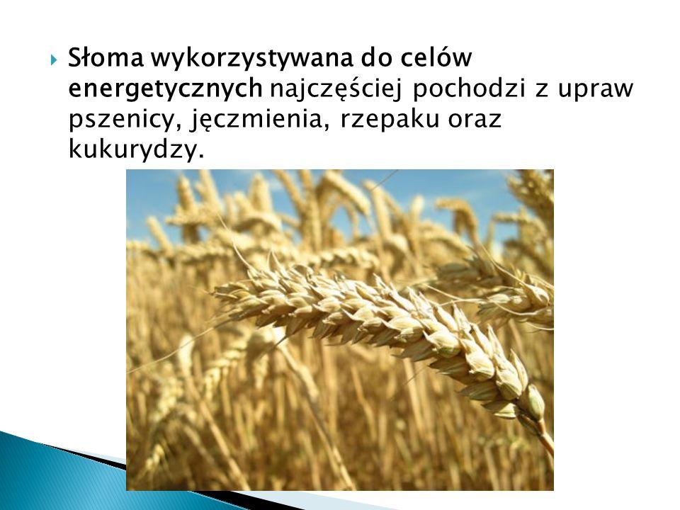  Słoma wykorzystywana do celów energetycznych najczęściej pochodzi z upraw pszenicy, jęczmienia, rzepaku oraz kukurydzy.
