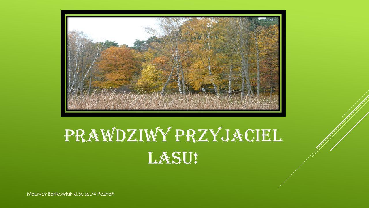 PRAWDZIWY PRZYJACIEL LASU! Maurycy Bartkowiak kl.5c sp.74 Poznań