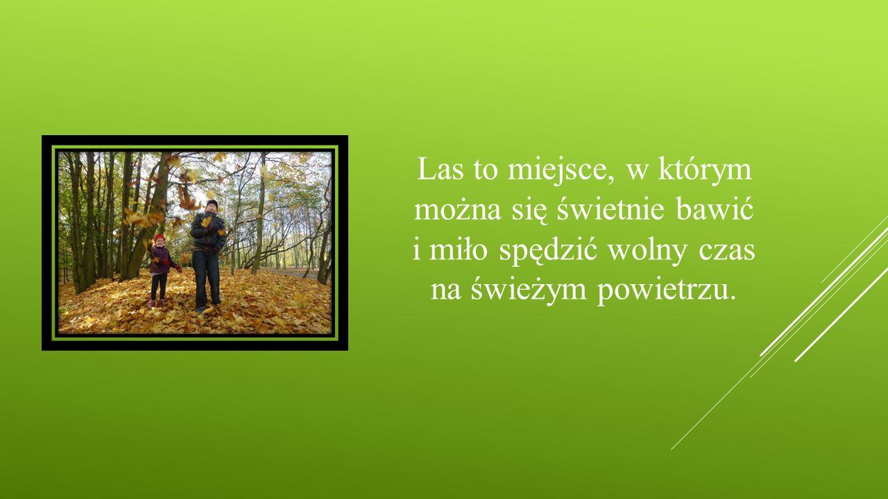 Las to miejsce, w którym można się świetnie bawić i miło spędzić wolny czas na świeżym powietrzu.