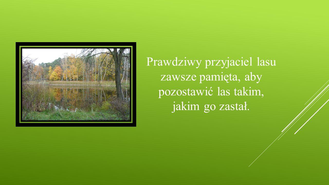 Prawdziwy przyjaciel lasu zawsze pamięta, aby pozostawić las takim, jakim go zastał.