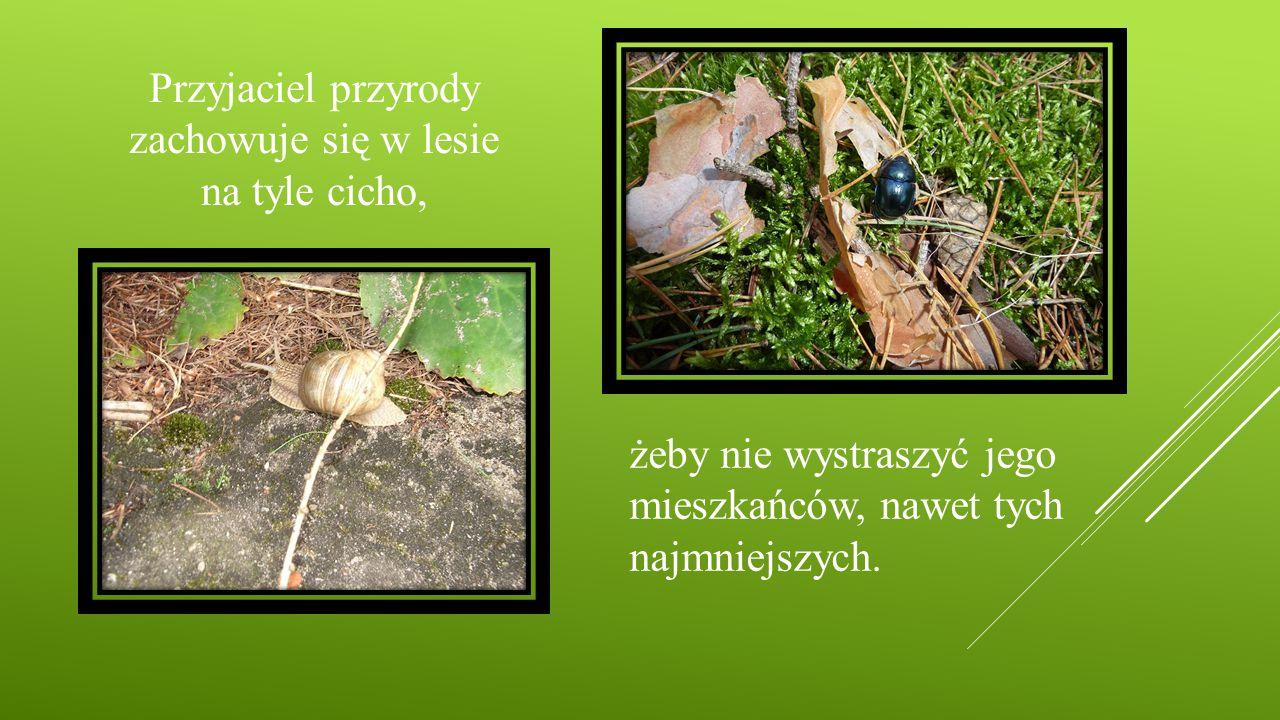 Przyjaciel przyrody zachowuje się w lesie na tyle cicho, żeby nie wystraszyć jego mieszkańców, nawet tych najmniejszych.