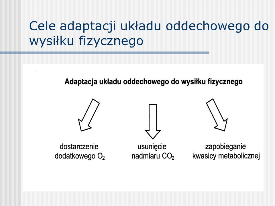 Cele adaptacji układu oddechowego do wysiłku fizycznego
