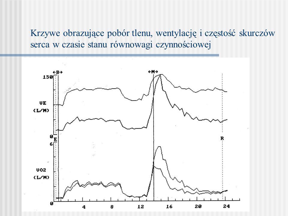 Krzywe obrazujące pobór tlenu, wentylację i częstość skurczów serca w czasie stanu równowagi czynnościowej