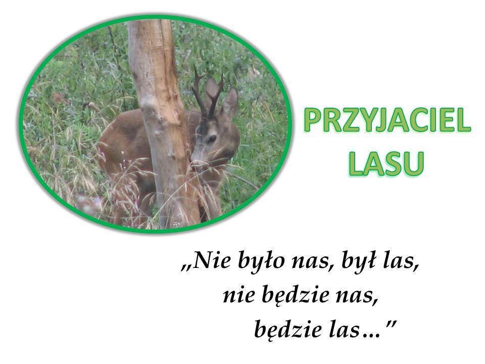 Przyjaciel lasu to, osoba która z najwyższą dbałością chroni las i zwierzęta w nim mieszkające czyli tak naprawdę przyjacielem lasu może być każdy z nas.