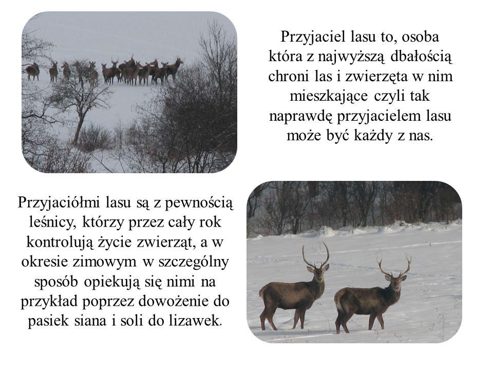 Przyjaciel lasu to, osoba która z najwyższą dbałością chroni las i zwierzęta w nim mieszkające czyli tak naprawdę przyjacielem lasu może być każdy z n