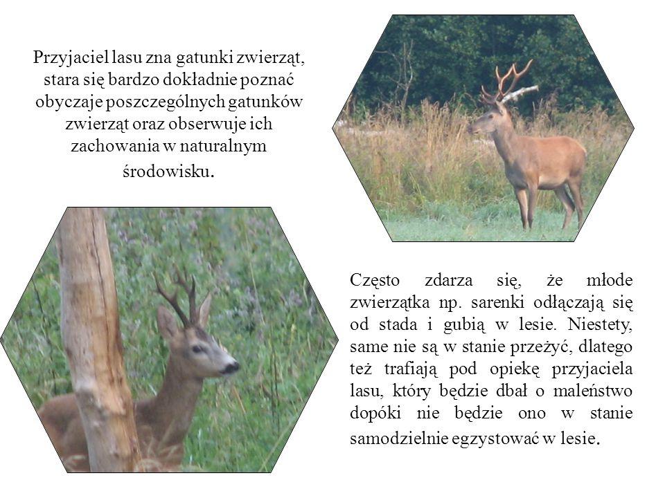Przyjaciel lasu zna gatunki zwierząt, stara się bardzo dokładnie poznać obyczaje poszczególnych gatunków zwierząt oraz obserwuje ich zachowania w natu