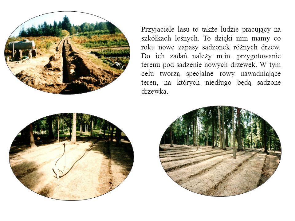 Przyjaciele lasu to także ludzie pracujący na szkółkach leśnych. To dzięki nim mamy co roku nowe zapasy sadzonek różnych drzew. Do ich zadań należy m.