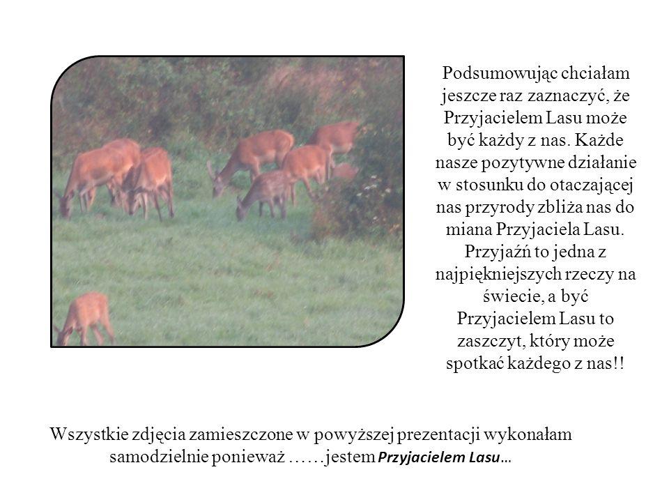Opracowała: Martina Wieczorek Zespół Szkół im.ks.