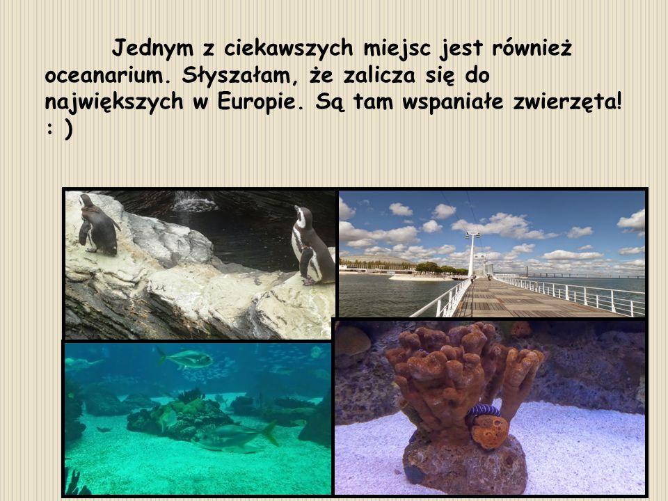 Jednym z ciekawszych miejsc jest również oceanarium. Słyszałam, że zalicza się do największych w Europie. Są tam wspaniałe zwierzęta! : )
